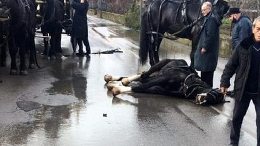 Botti al matrimonio, cavallo del carro funebre si spaventa e muore